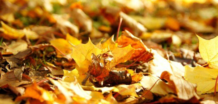 foglie morte